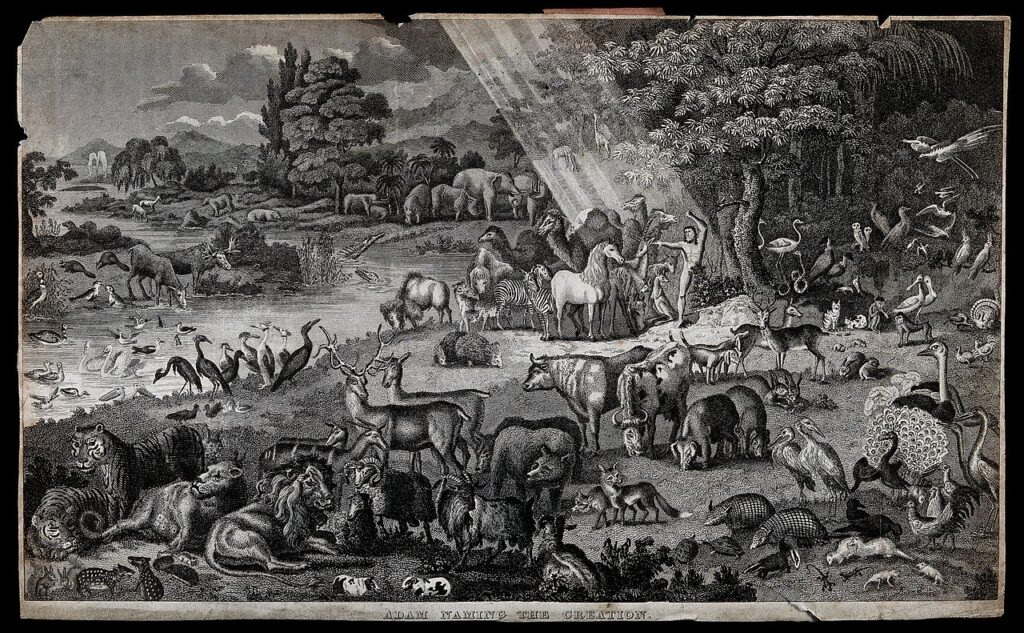 Image used under a Collective Commons License from https://commons.wikimedia.org/wiki/File:Adam_names_the_animals_in_the_Garden_of_Eden._Etching._Wellcome_V0022962.jpg